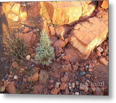 Red Rock Christmas Metal Print by Marlene Rose Besso