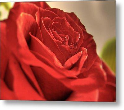 Red Rose Closeup Metal Print