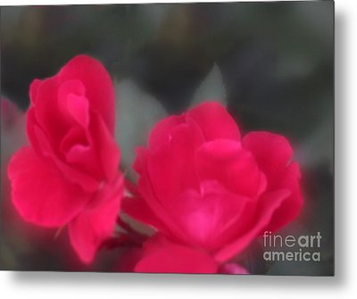 Metal Print featuring the photograph Red Rose Harmony by Mary Lou Chmura
