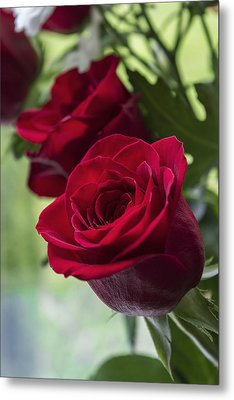 Red Rose Metal Print by Ian Mitchell
