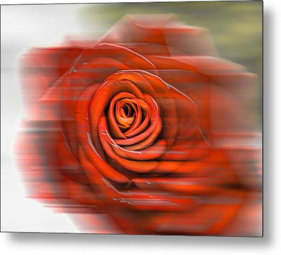 Metal Print featuring the photograph Red Rose by Leif Sohlman