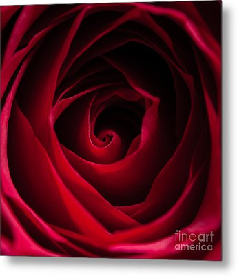 Metal Print featuring the photograph Red Rose Square by Matt Malloy