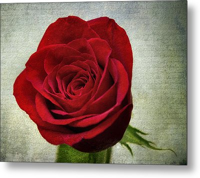 Red Rose V2 Metal Print by Ian Mitchell