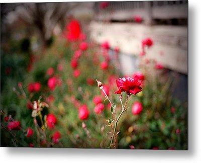Red Roses On Film Metal Print