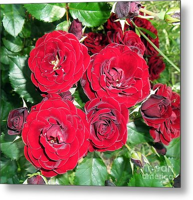 Metal Print featuring the photograph Red Roses by Vesna Martinjak