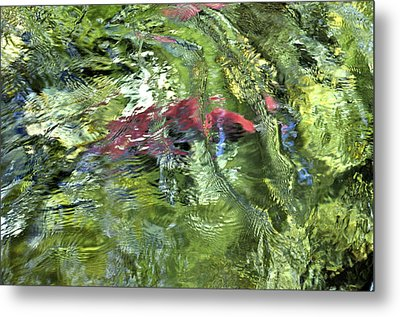 Metal Print featuring the photograph Red Salmon In Steep Creek by Cathy Mahnke