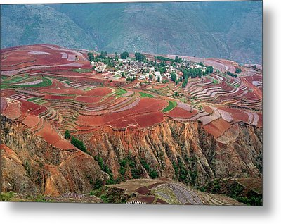 Red Soil Farmlands In Dongchuan District Metal Print by Tony Camacho