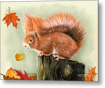 Red Squirrel In Autumn Metal Print by Sarah Batalka