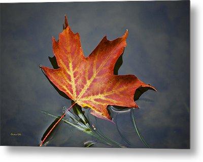 Red Sugar Maple Leaf Metal Print by Christina Rollo