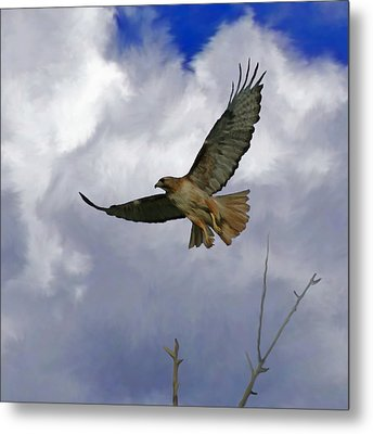 Red Tail Hawk Digital Freehand Painting 1 Metal Print by Ernie Echols