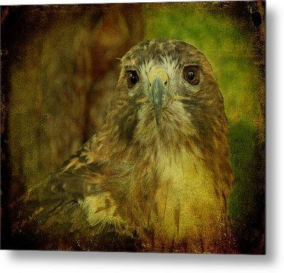 Red-tailed Hawk II Metal Print by Sandy Keeton