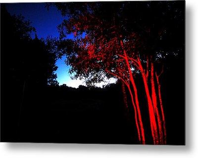 Red Trees Metal Print by Susan D Moody