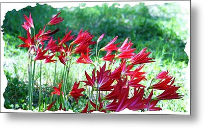 Red Trumpets Metal Print by Ellen O'Reilly