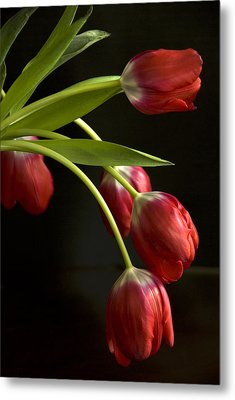 Red Tulips Metal Print by Cindy Rubin