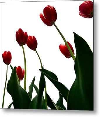 Red Tulips From The Bottom Up Vl Metal Print by Michelle Calkins