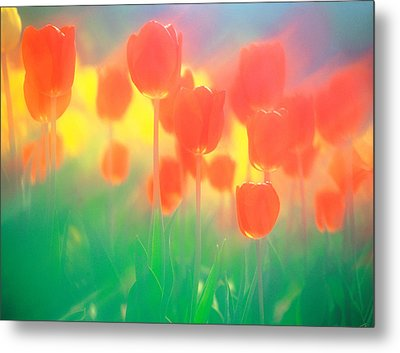 Red Tulips Metal Print by Panoramic Images