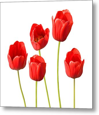 Red Tulips White Background Metal Print by Natalie Kinnear