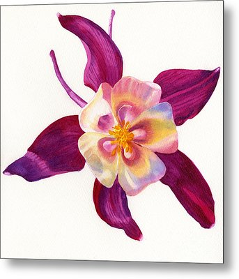 Red Violet Columbine Square Design Metal Print by Sharon Freeman