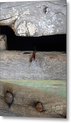 Red Wasp Metal Print by Brenda Dorman