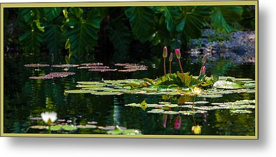 Red Water Lily In A Tropical Pond Metal Print by Julio Solar