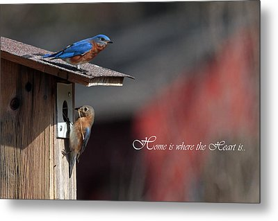 Red White And Blue Birds Metal Print by Michael Rucci