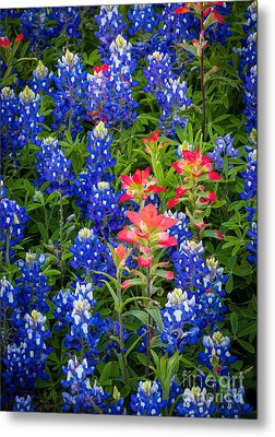 Red White And Blue Metal Print by Inge Johnsson