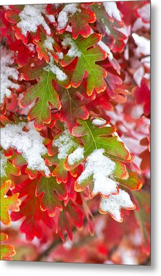 Metal Print featuring the photograph Red White And Green by Ronda Kimbrow