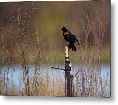 Red Winged Blackbird 2 Metal Print by Ernie Echols