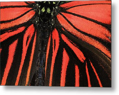 Metal Print featuring the photograph Red Wings by Sonya Lang