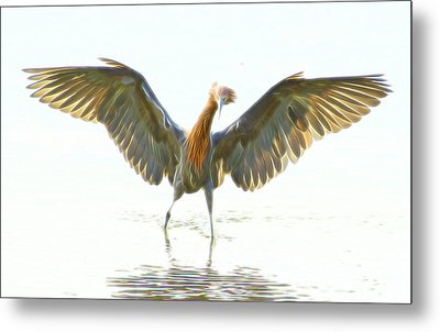 Metal Print featuring the digital art Reddish Egret 2 by William Horden