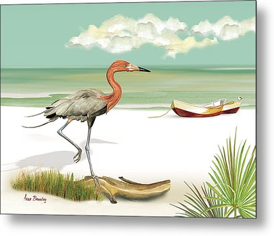 Reddish Egret Metal Print by Anne Beverley-Stamps