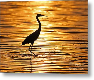 Reddish Egret At Sunset Metal Print