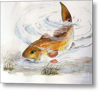 Redfish Metal Print by Sibby S