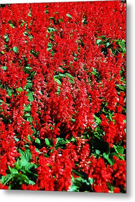 Redlicious Metal Print by Aimee L Maher Photography and Art Visit ALMGallerydotcom