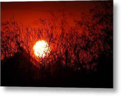 Redorange Sunset Metal Print by Matt Harang
