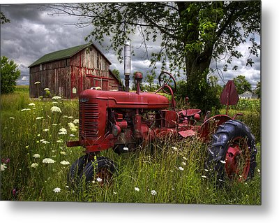 Reds In The Pasture Metal Print