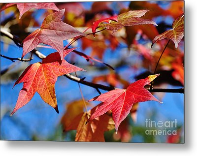 Reds Of Autumn Metal Print by Kaye Menner