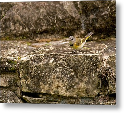 Redstart In Ruins Metal Print