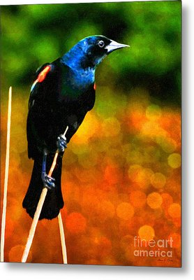 Metal Print featuring the photograph Redwing by Adam Olsen