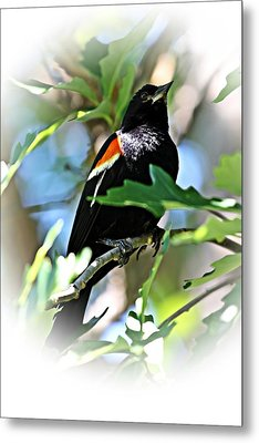 Redwing Strikes A Pose Metal Print