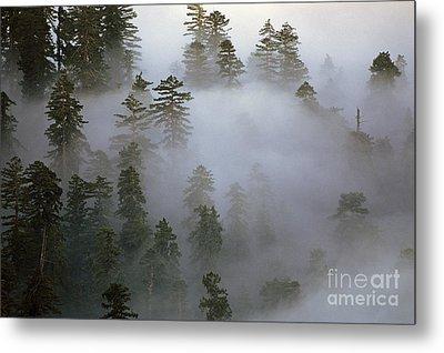 Redwood Creek Overlook With Giant Redwoods  Metal Print