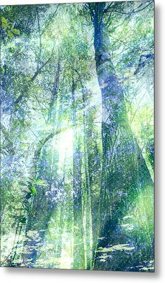 Redwood Dreams Metal Print by Nicole Swanger