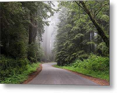 Redwoods In Northern California Metal Print