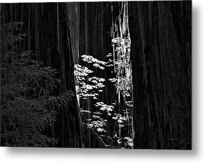 Redwoods Light And Texture Metal Print