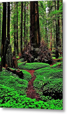 Redwoods Wonderland Metal Print
