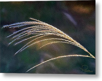 Reed Grass Metal Print