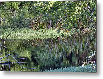 Metal Print featuring the photograph Reed Reflections by Kate Brown