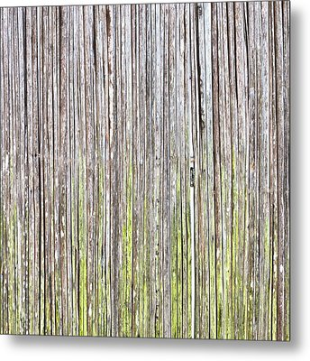 Reeds Background Metal Print by Tom Gowanlock