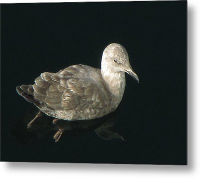 Refections Of A Gull Metal Print by Jennifer Wheatley Wolf