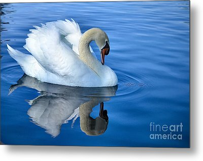 Reflecting Metal Print by Deb Halloran